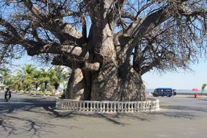 38000km: Voyage à Madagascar: Majunga